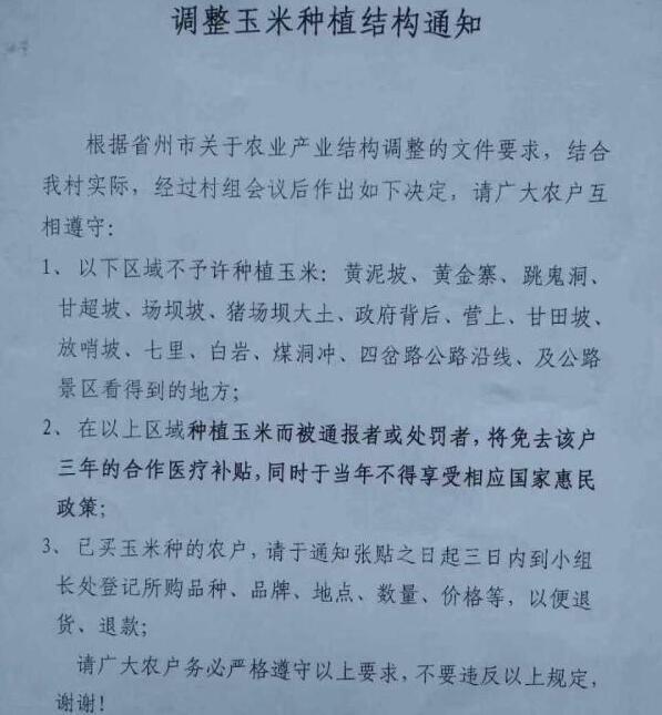 """贵州一村为调整种植结构""""种玉米将被罚"""" 镇政府:停止执行"""