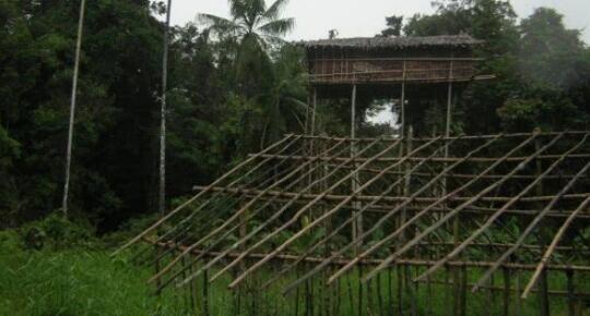 丢大脸了!BBC纪录片造假被揭发 科罗威人的树屋临时搭建