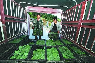 """用索道运送蔬菜 一条溜索上的""""扶贫之路"""""""