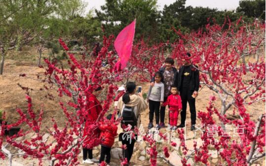 沂源桃花岛桃花节开幕 国际设计大师用艺术活化乡村