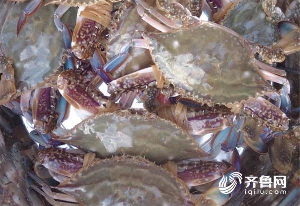 威海5月1日起进入伏季休渔期 渔船需返港停靠