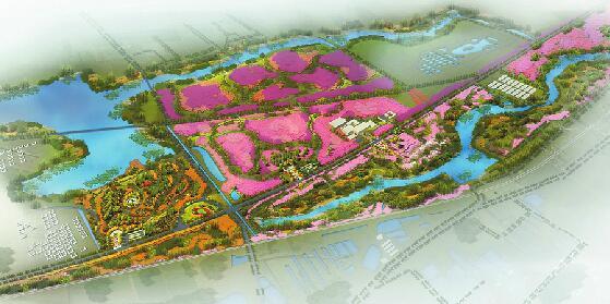 赏花就到黄河北 新旧动能转换先行区已种植3万株樱花