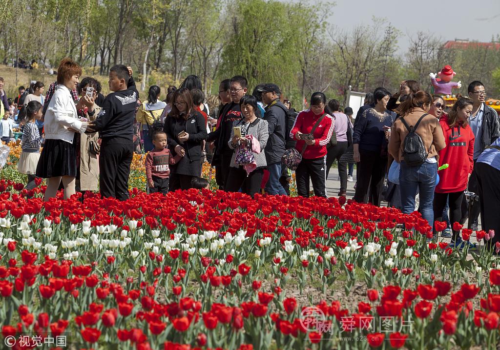 滨州:近300万株郁金香齐绽放 数万游客涌入赏花
