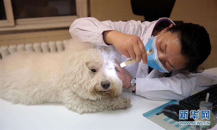 """动辄几千元!这些宠物医院为何能""""任性""""收费"""