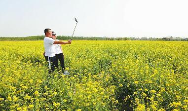 槐荫:千亩油菜花背后的农业转型