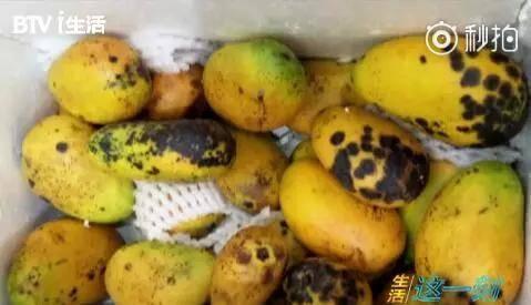 恶心到吐!网红饮品内幕曝光 用来榨汁的竟然是发黑腐烂的芒果