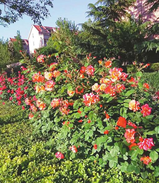 """鲜花捧红了转山西路 CBD这条鲜花铺成的""""网红路""""你来过吗?"""