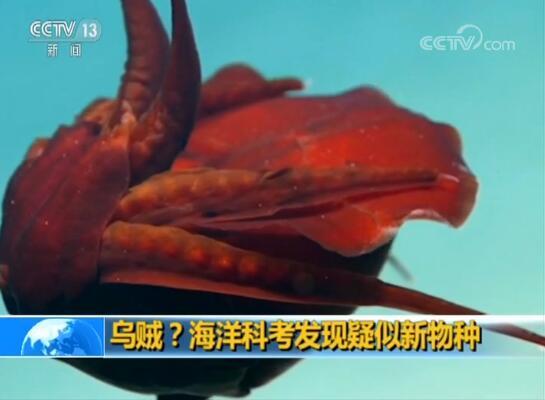 海洋科考疑新物种 长相奇特似外星来物