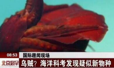 【罕见】海洋科考疑新物种