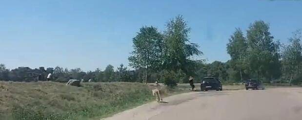 夫妻竟带着孩子违反规定下车 遭猎豹围攻 所幸猎豹吃饱了