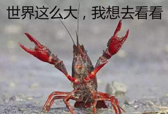 不是麻辣的?德国小龙虾泛滥 法国名厨一道
