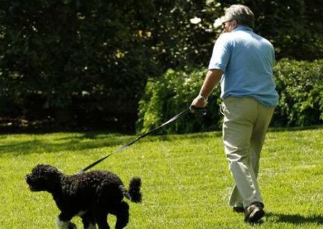 惊魂!老人公园遛狗中箭 爱好者相约练箭闯大祸老人腿部中箭