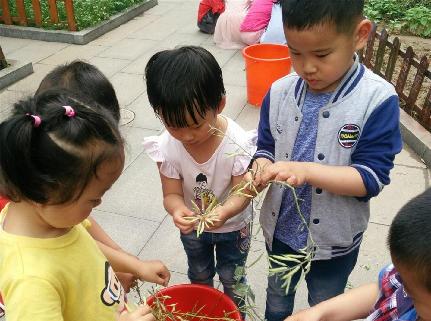 相约雨后,走近幸福小菜园 济南市槐荫区大金新苑幼儿园种子采摘活动