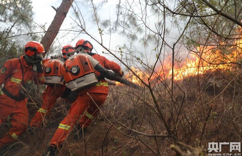 大理苍山发生森林火灾 武警官兵全力扑救 在陡坡密林中艰难扑打