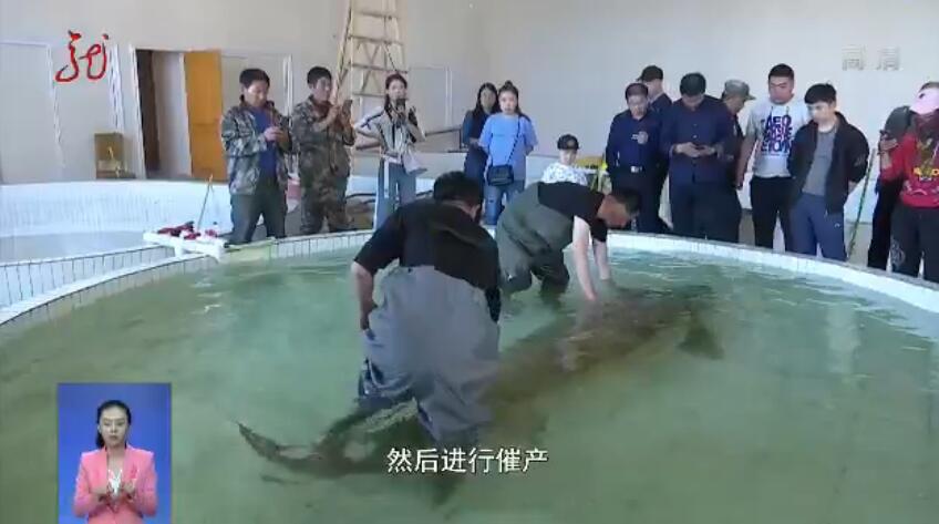 个头比人还大!渔民捕千斤大鳇鱼 重达1028斤卖了20万元
