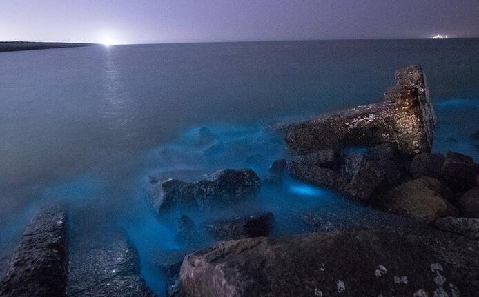 """山东现荧光海滩 """"阿凡达世界""""如同星辰坠入大海一般"""