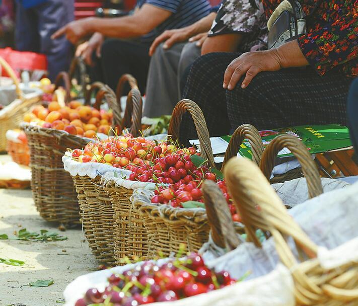 88百家乐现金网南山露天樱桃近乎绝产 往年忙着卖樱桃今年忙着辞订单