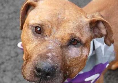 这只狗狗要被安乐死 可上万人为它求情但没有人收留它