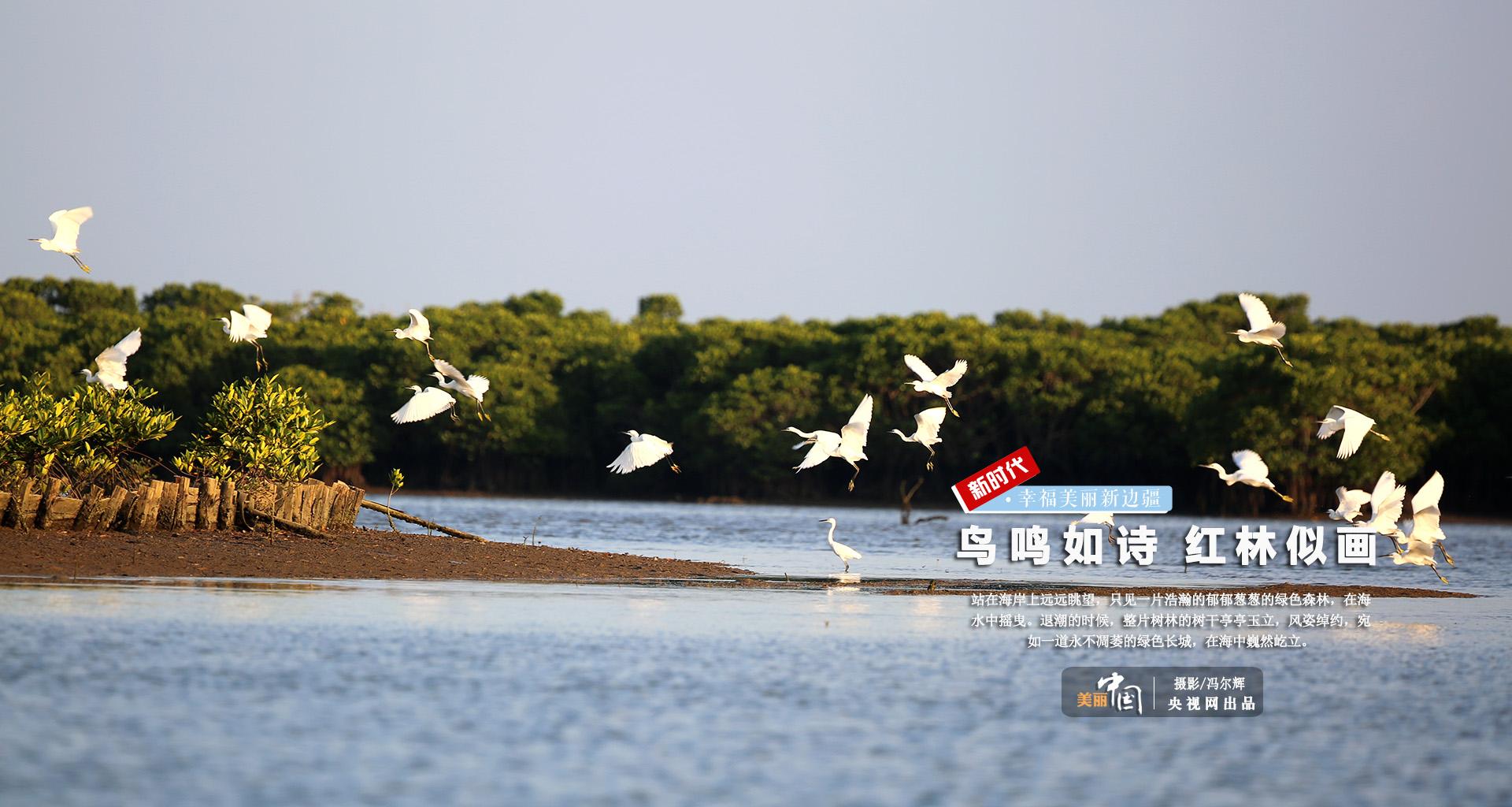 【新时代·幸福美丽新边疆】鸟鸣如诗 红林似画