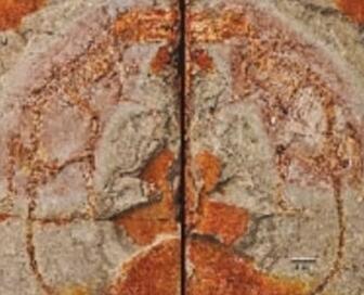 科学家发现混元兽 有袋类动物起源于亚洲结论可能是错的?