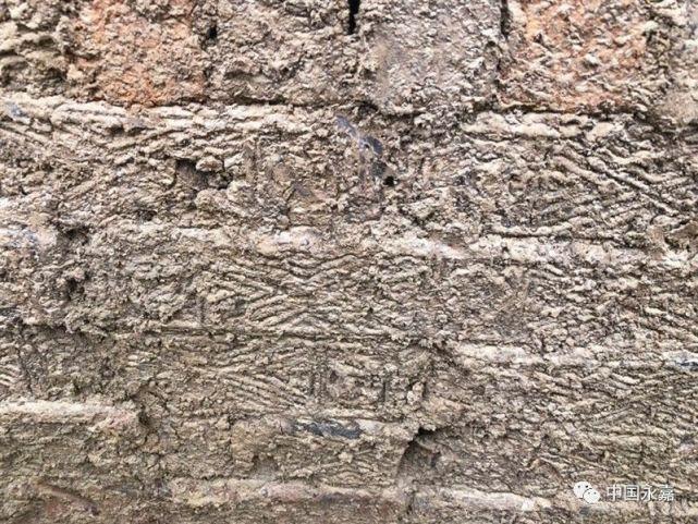 神秘发现!温州现千年古墓群 有的墓砖上印有铜钱模样的花纹