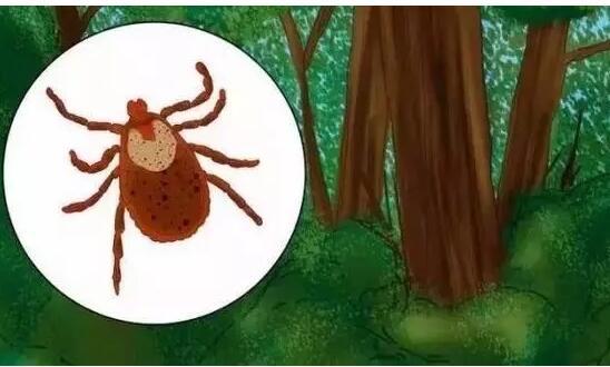 如何鉴别自己是否被蜱虫咬了 ?被蜱虫咬伤丧命 一家人阴阳两隔