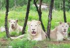 野生动物世界 夜探动物城白狮来助阵