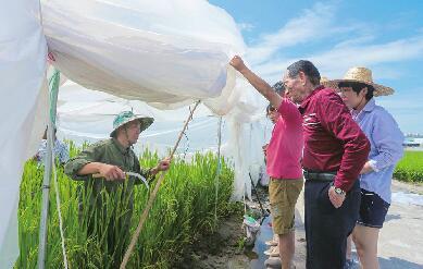济南新旧动能转换新亮点——袁隆平团队要来黄河北种大米