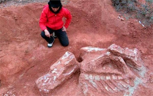 """巨型恐龙遗骸出土 被命名为""""Ingentia prima""""意为第一只巨兽"""