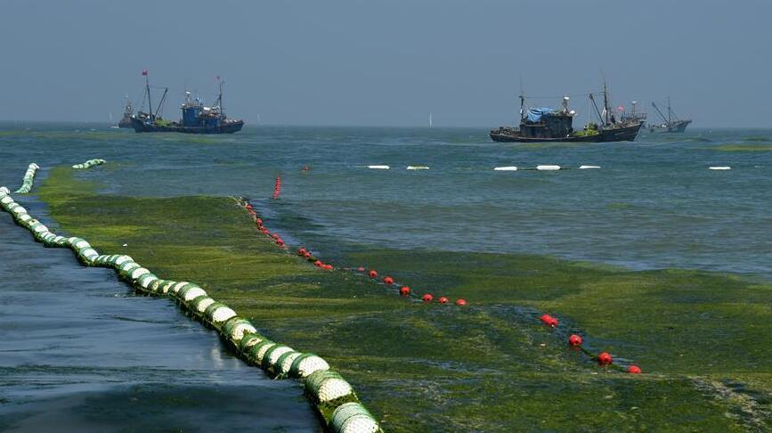 青岛设置40公里海上拦截网 精准打捞清理浒苔