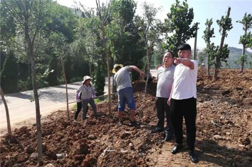 港沟街道雨季造林.植绿补绿工作已全面展开!