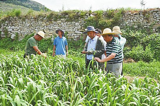 农业专家齐聚济南为我市杂粮生产建言献策