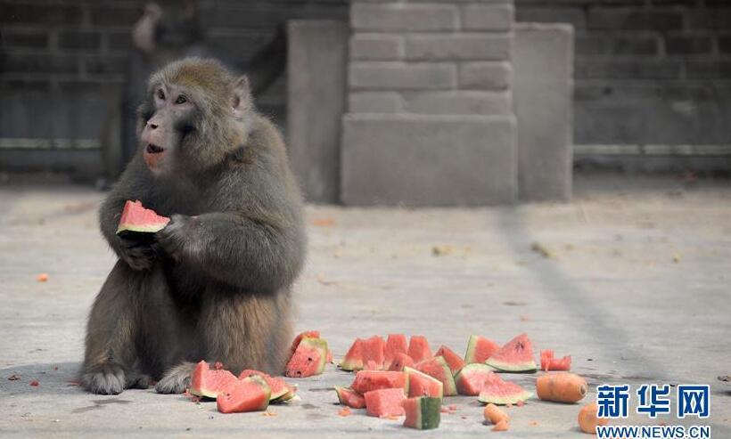 近日,江苏常州持续高温,淹城野生动物园的工作人员用各种办法为动物
