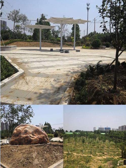 王舍人街道:绿化升级现景观 城市颜值大提升