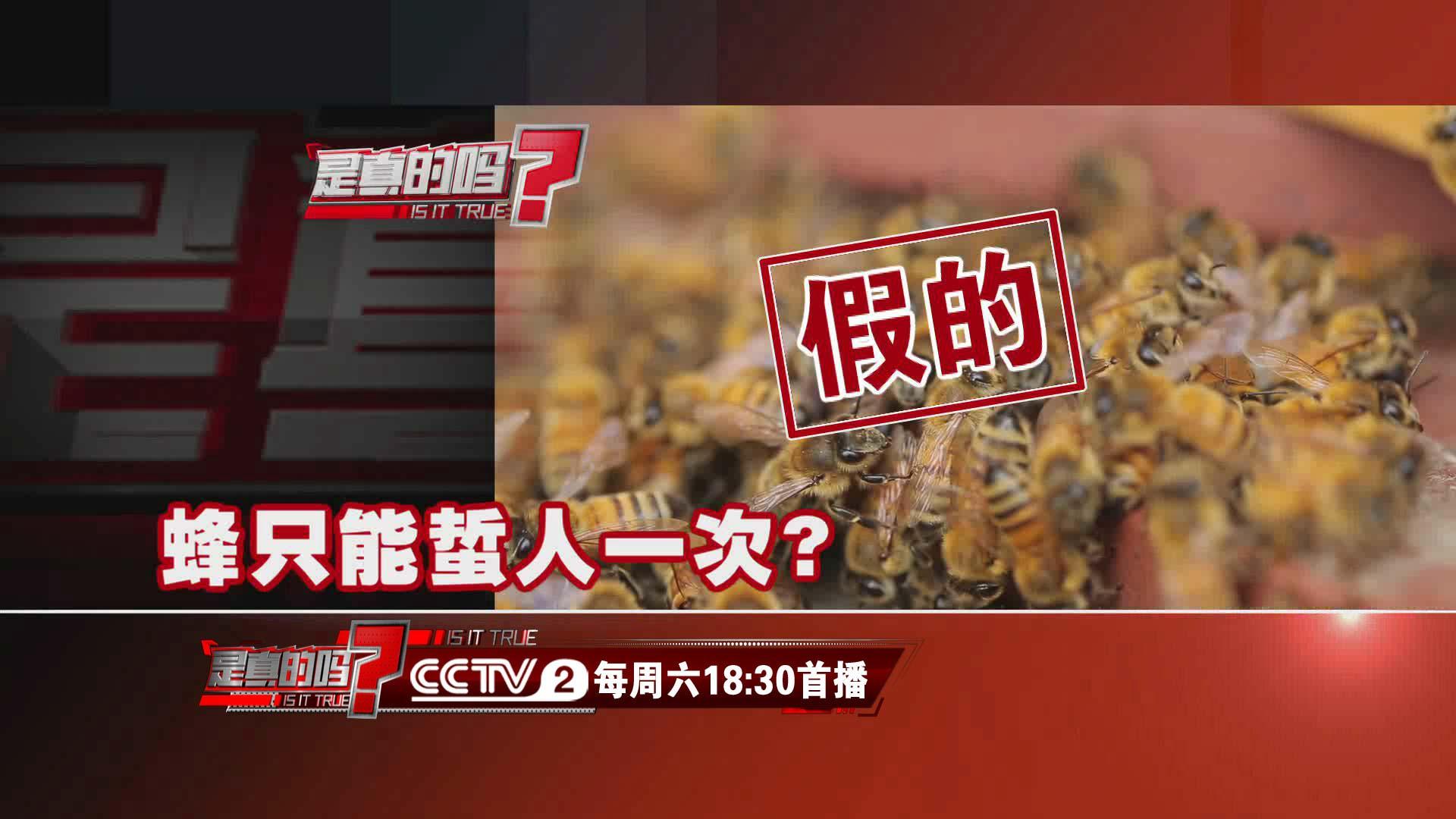 这就是真相 蜂只能蜇人一次?假的 多数蜂类蜇针上不带倒钩
