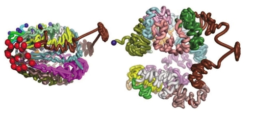 """世界首例""""单条染色体的酿酒酵母""""诞生记"""