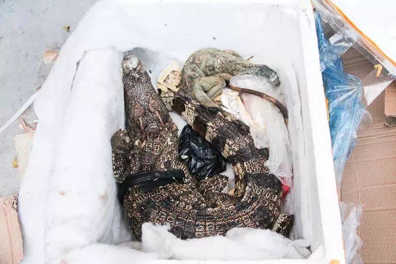 吓死宝宝了!女子网购收到鳄鱼 保健品是如何神奇的变成动物的?