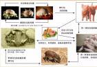 温州发生猪瘟疫情 该起疫情已得到有效处置