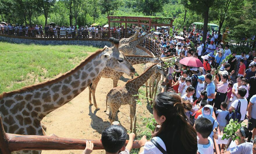 济南野生动物世界 中小学开学在即园区迎来客流高峰