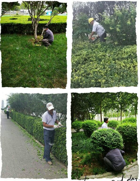 美化园林环境,提升绿化景观,推进园林绿化整治行动