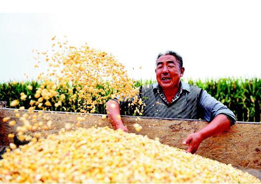 今日秋分 山东各地欢庆第一个中国农民丰收节