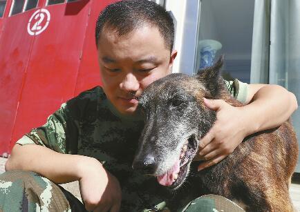 5·1288必发官网唯一健在功勋犬与训导员团聚