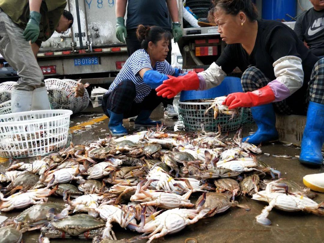 """青岛渔港码头鱼蟹上岸 小杂鱼刚上岸就被""""包圆"""""""