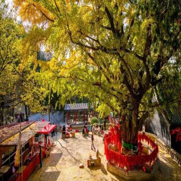 金秋时节红叶烂漫▓▓,济南周边有这些地方可以赏秋!