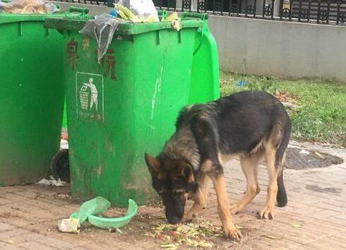 警犬被盗事件通报