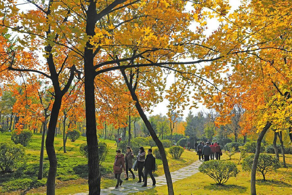 秋色城市森林 醉美市民乐园