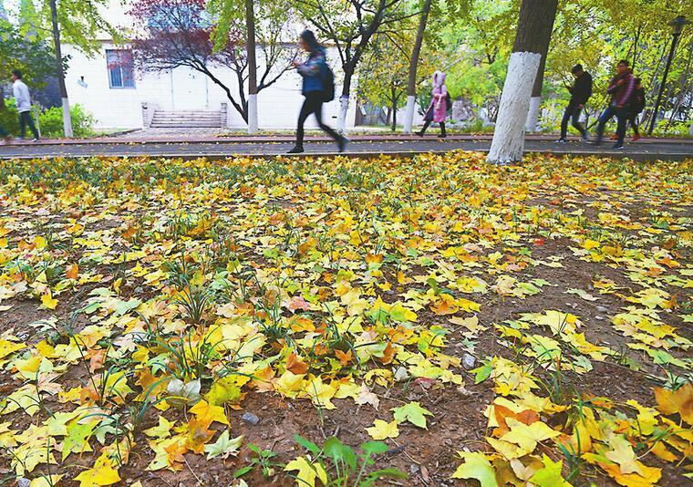 今日立冬小雨来,济南全市最低气温仅3℃