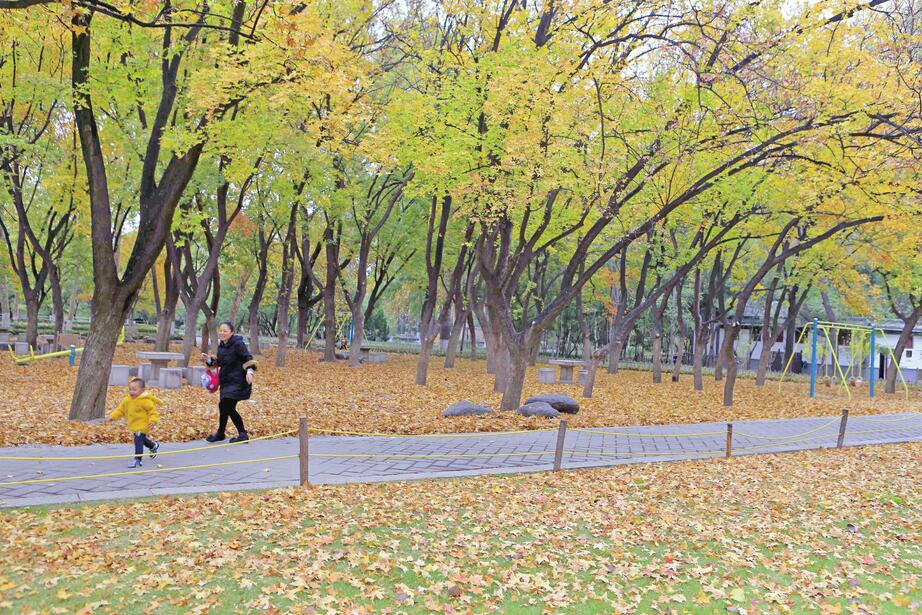 诗意动物园 晚秋分外美