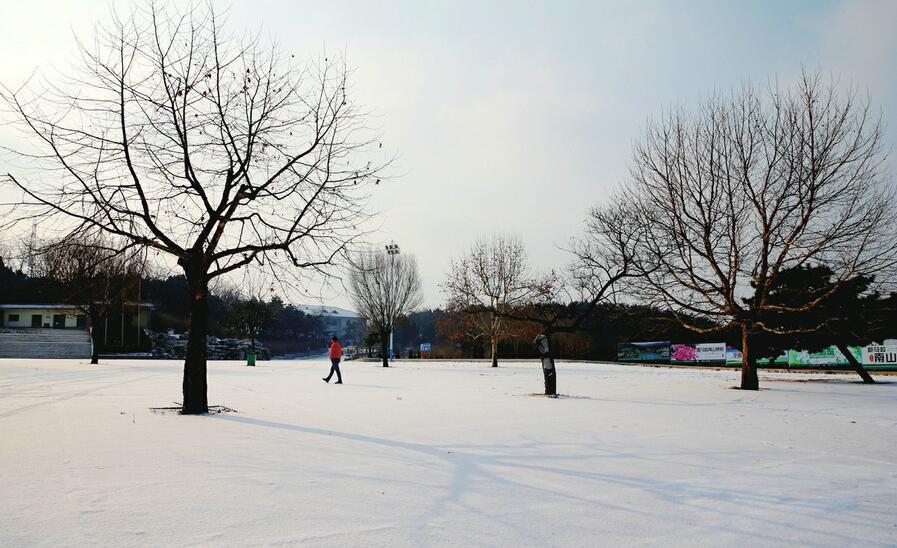 雪后赛马岭美如画