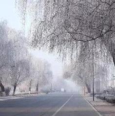 纯美的雾凇景观